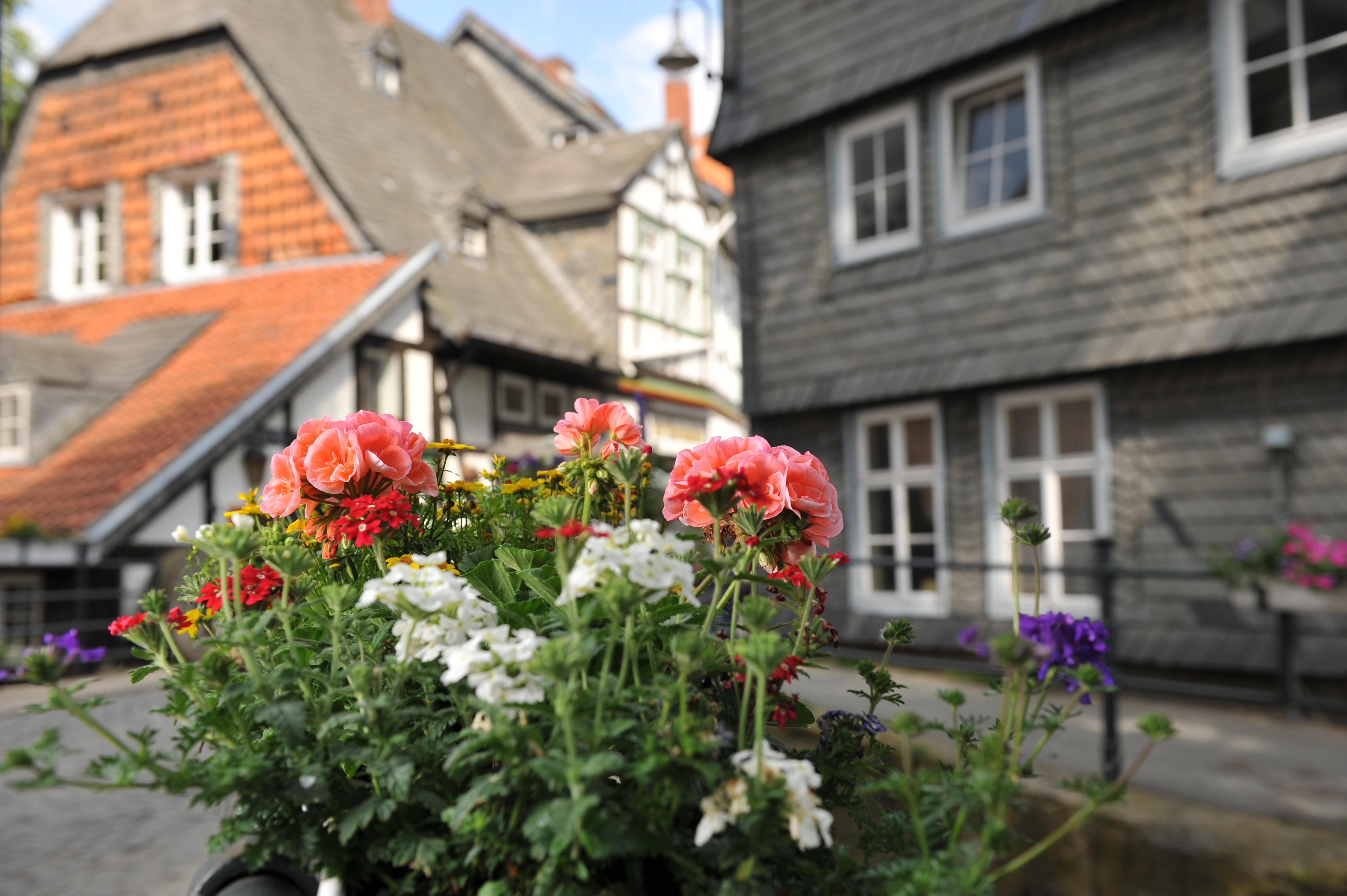 Gartenmarkt Am 5 Mai Hier Blüht Dir Was Goslar Am Harz Unesco