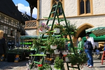 Gartenmarkt GOSLAR marketing gmbh Fotograf Anette Kilb